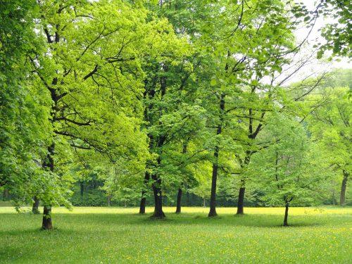 new trees Kitchener